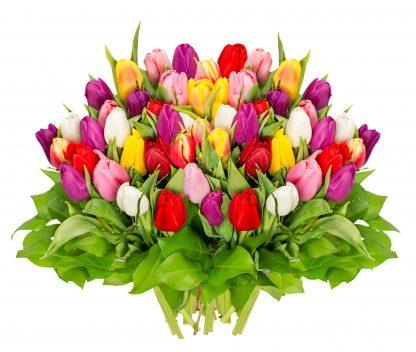 50 Tulpen